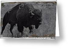 Crossing The Plains Greeting Card
