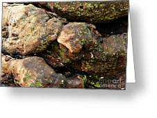 Crotchety Old Moss Covered Tree Man Greeting Card