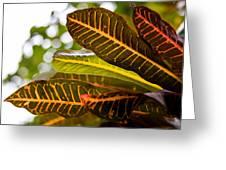Croton Greeting Card