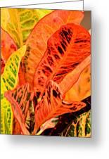 Croton's Many Colors Greeting Card
