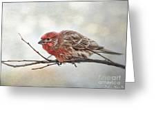 Crouching Finch 5x7 Greeting Card