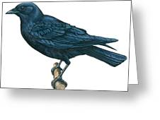 Crow Greeting Card by Anonymous