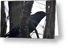 Crow Eye Greeting Card