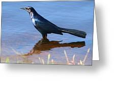 Crow In The Water Greeting Card