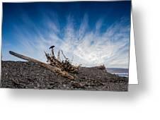 Crow On Driftwood Greeting Card