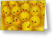 Crowded Chicks Greeting Card