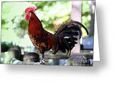 Crowing Red Junglefowl Rooster Greeting Card