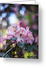 Crown Of Rhodies Greeting Card