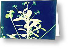 Crown Of Thorns - Blue Greeting Card