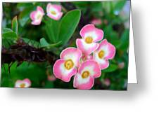 Crown Of Thorns Flower Greeting Card