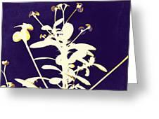 Crown Of Thorns - Indigo Greeting Card by Shawna Rowe