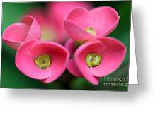 Crown Of Thorns Photo Greeting Card