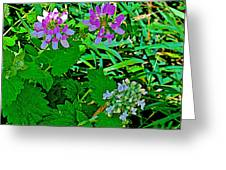 Crown Vetch And Catnip In Pipestone National Monument-minnesota Greeting Card