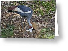 Crowned Crane And Eggs Greeting Card