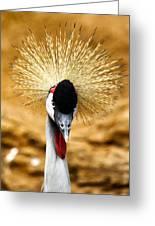 Crowned Crane - Balearica Regulorum Greeting Card