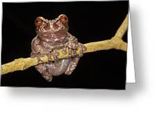Crowned Frog Costa Rica Greeting Card