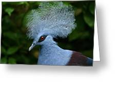 Crowned Pigeon Goura Cristata, Bali Greeting Card