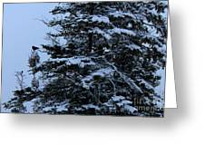 Crows Perch - Snowstorm - Snow - Tree Greeting Card