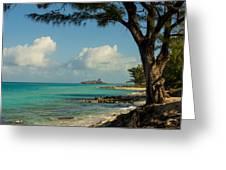 Cruise Bimini Greeting Card