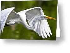 Cruising Egret Greeting Card