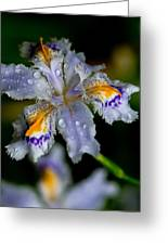 Crying Fringed Iris-iris Japonica Greeting Card