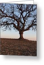 Cryptic Tree Greeting Card