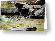 Crystal Clear Waters Of Hurricane Branch Greeting Card