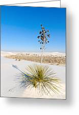 Crystal Dune Tree At White Sands National Monument In New Mexico. Greeting Card