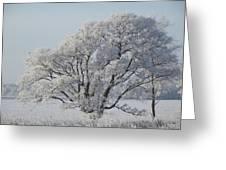 Crystal Oak Greeting Card