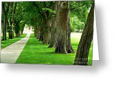 Csu Tree Path Greeting Card