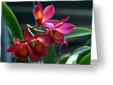 Ctna New River Orchid Greeting Card