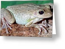 Cuban Tree Frog Osteopilus Greeting Card