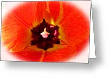 Cultivar Orange Tulip Greeting Card
