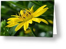 Cup Flower Greeting Card