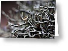 Cup Lichen Greeting Card