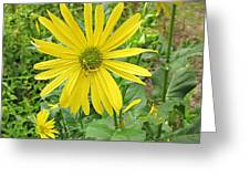 Cup Plant Blooms Greeting Card