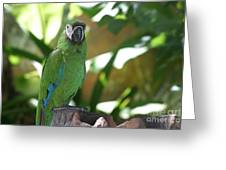 Curacao Parrot Greeting Card