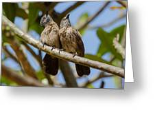 Curious Brown Babblers Greeting Card