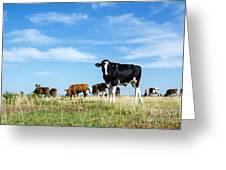 Curious Bull Greeting Card