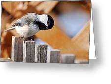 Curious Chickadee Greeting Card