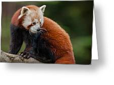 Curious Critter Greeting Card