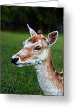 Curious Doe Greeting Card by Mariola Bitner
