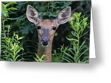 Curious Doe Up Close Greeting Card