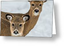 Curious Does Greeting Card