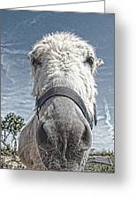 Curious Donkey Greeting Card