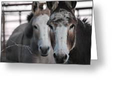 Curious Donkeys Greeting Card