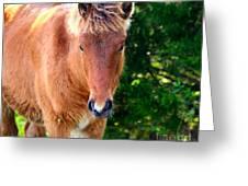 Curious Foal Greeting Card