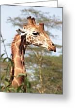 Curious Giraffe 2 Greeting Card