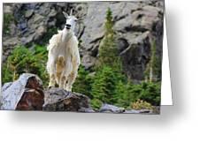 Curious Goat Greeting Card