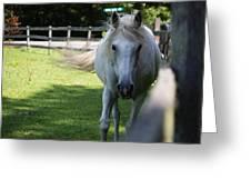 Curious Horse Greeting Card